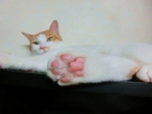 ashinoura-cat