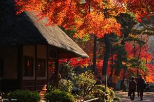 koishikawa