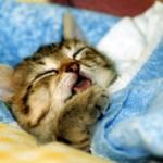 ぐっすりと眠りたい方必見!寝つきを良くする5つのルール